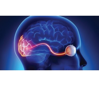 Lutein and Zeaxanthin Protect Vision While Boosting Brain Blood Flow